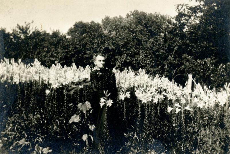 Antiguos Anuales | Bellas Jardinería